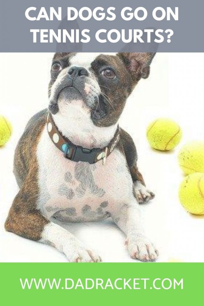 can dogs go on tennis courts
